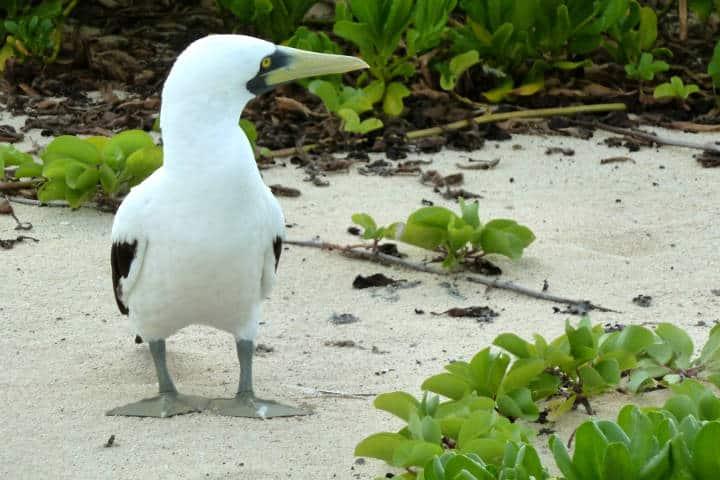 contoy-isla-de-las-aves-11
