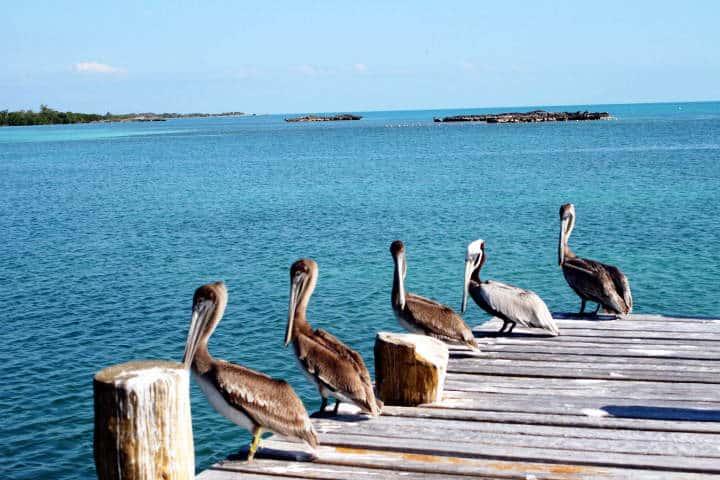 contoy-isla-de-las-aves-12