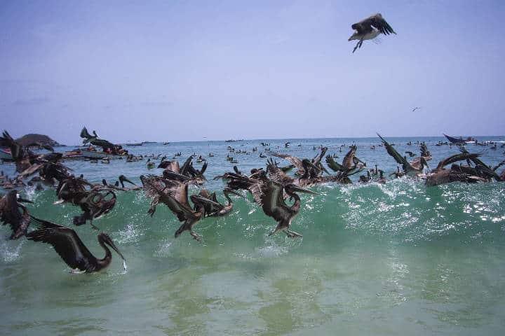 contoy-isla-de-las-aves-2
