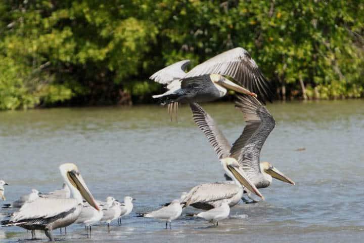 contoy-isla-de-las-aves-3