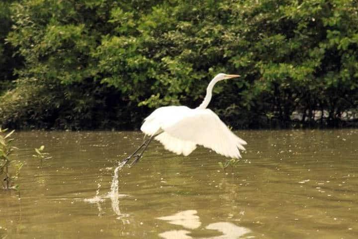 contoy-isla-de-las-aves-4