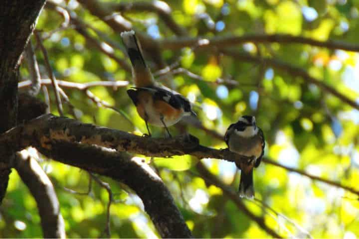 contoy-isla-de-las-aves-5