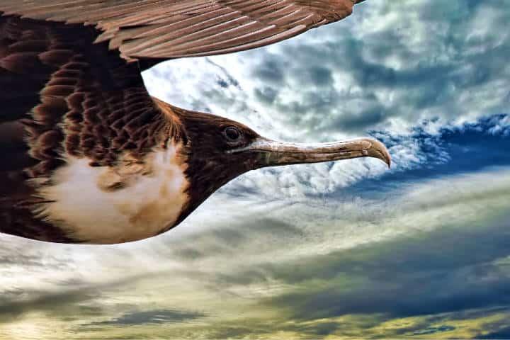 contoy-isla-de-las-aves-6
