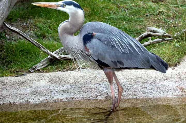 contoy-isla-de-las-aves-7