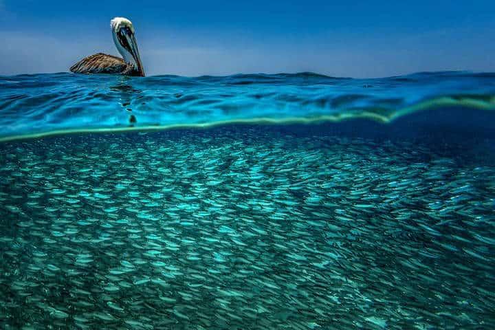contoy-isla-de-las-aves-8