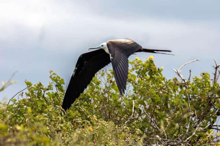 contoy-isla-de-las-aves-9