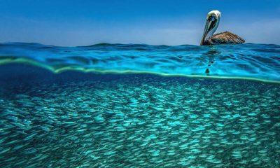 Contoy isla-de-las-aves-8