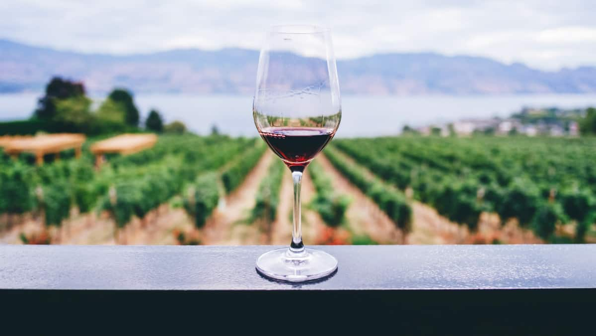 Ruta del vino con Club Premier Foto Kym Ellis