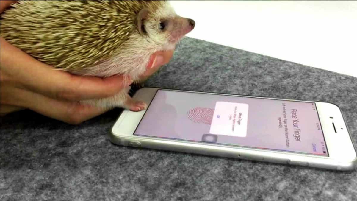 Video Erizo desbloquea iPhone Foto Archivo