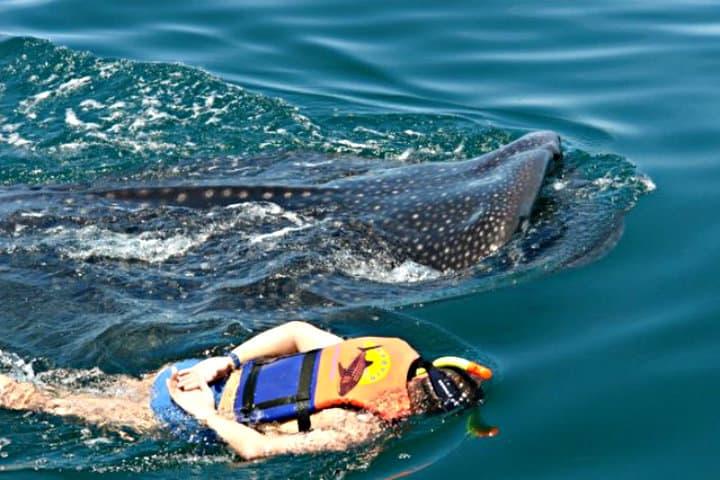 holbox-tiburon-ballena