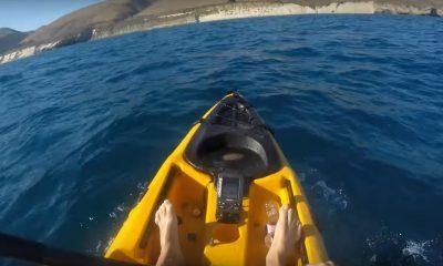 kayakista-tiburon