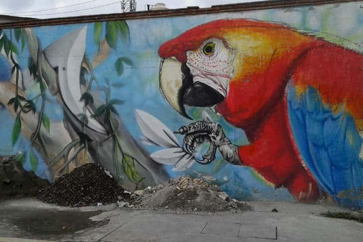 arte-urbano-cdmx-accion-intransigente