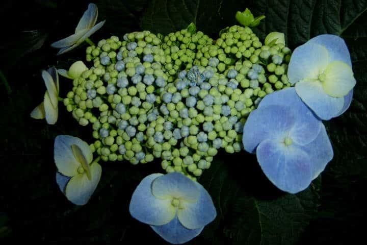 Hermosas flores de Puebla. Foto: Archivo
