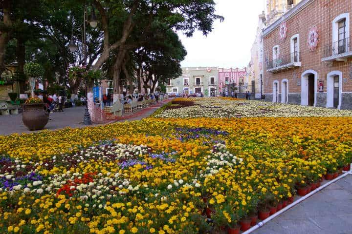 atlixco-puebla-flores-2