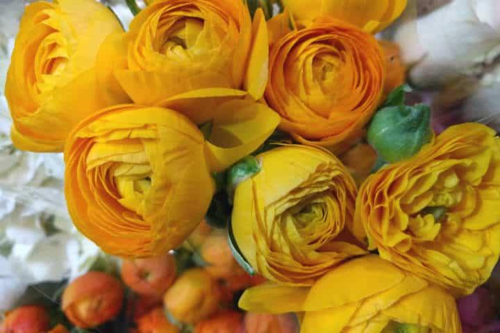 Retiro Floral CDMX 22