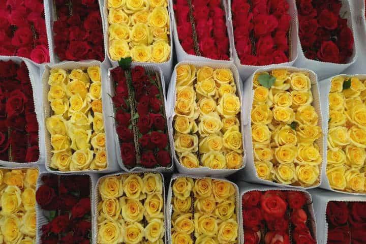 Retiro Floral CDMX 23