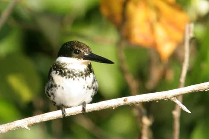 festival de aves migratorias san blas 4