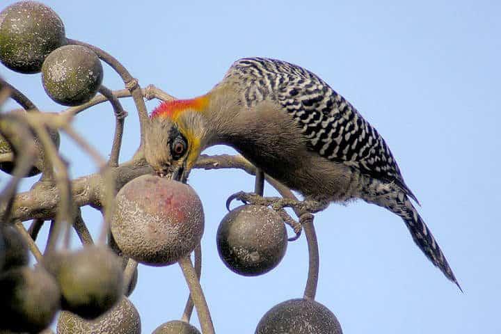festival de aves migratorias san blas 5