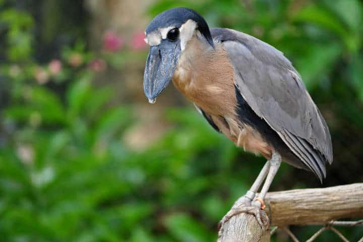 festival de aves migratorias san blas 8