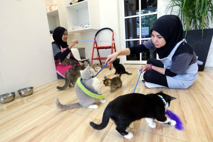 Catzonia es el sueño para los gatos.Foto.Berita Harian.3