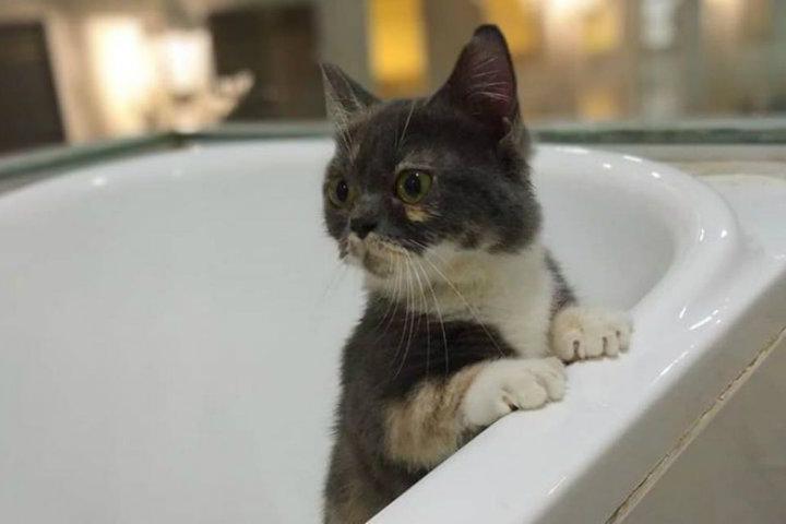 Catzonia hotel para gatos.Foto.Twitter.4
