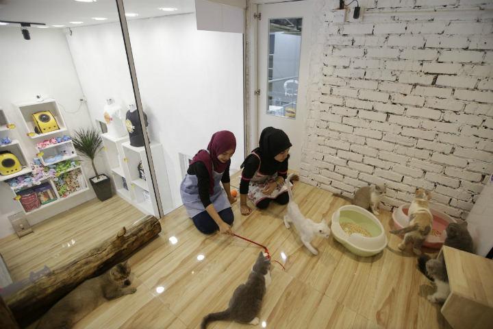 Juegos apapachos y mucha comida qué más pueden pedir.Foto.CatDumb.2