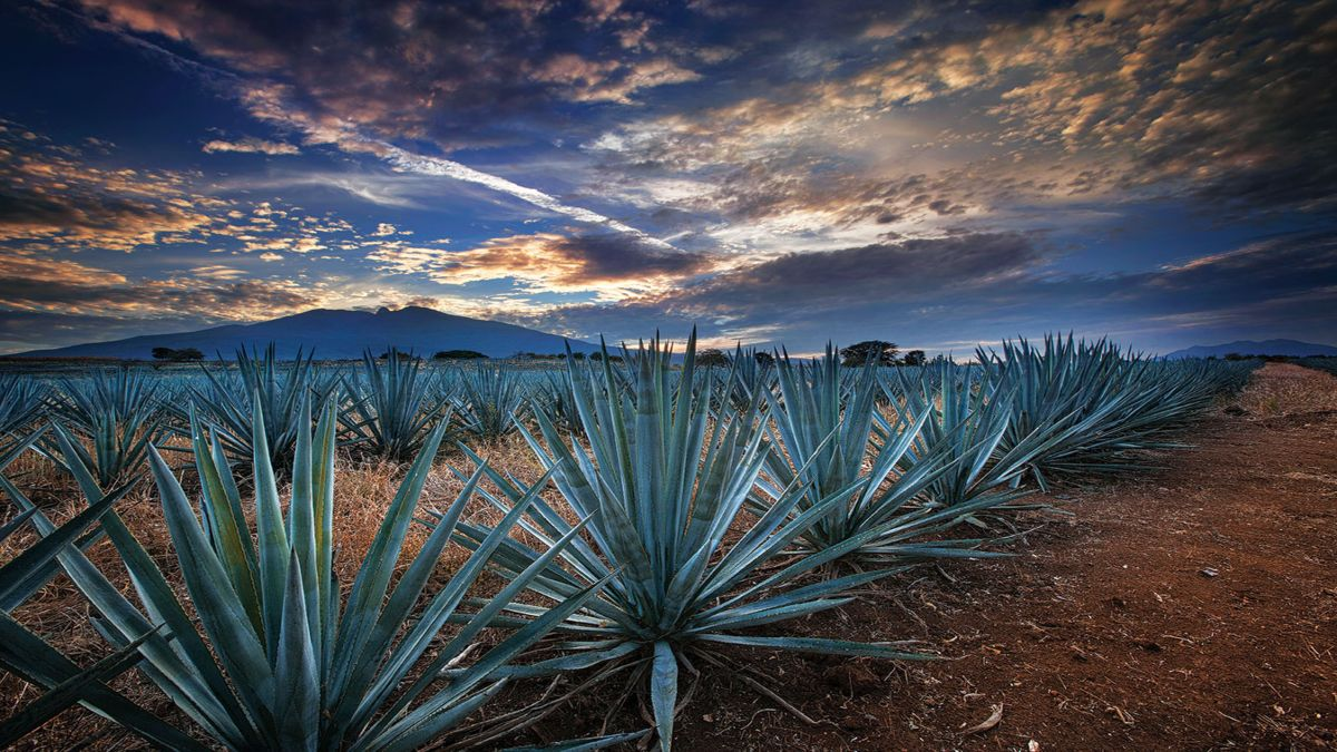 Portada. Tesoros de Jalisco para el mundo. Foto. Tendencias
