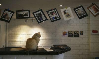 Portada.Hotel Catzonia exclusivo para gatos.Foto.Pinterest