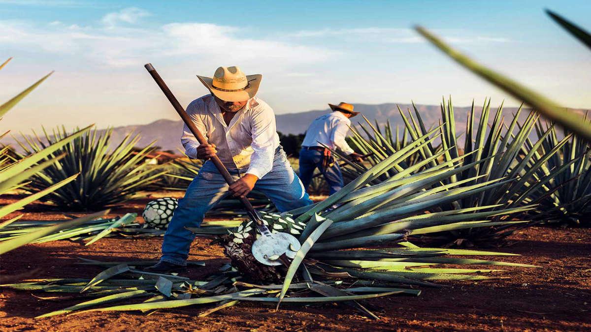 Portada.Tesoros de Jalisco para el mundo.Foto.Mundo cuervo
