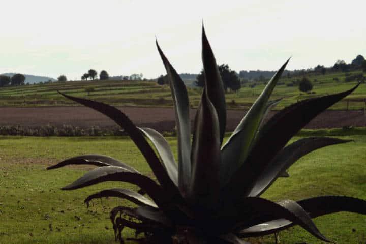 tlaxcala hacienda xochuca copia