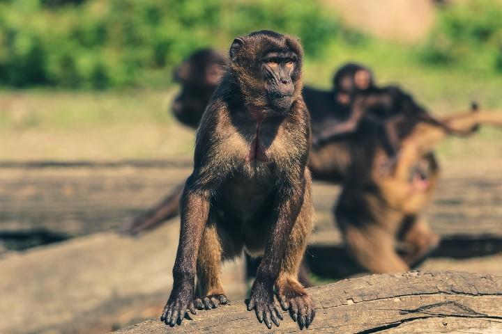 Famosa playa con monos en Tailandia. Foto: seth0s