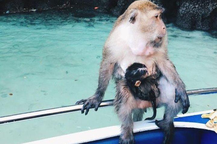 Famosa playa con monos en Tailandia. Foto: stephanie.etc Instagram