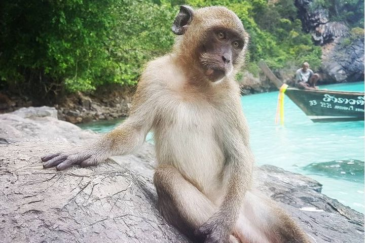 Cuentame más de la famosa playa de monos en Tailandia. Foto: kiedysbedefit87 Instagram