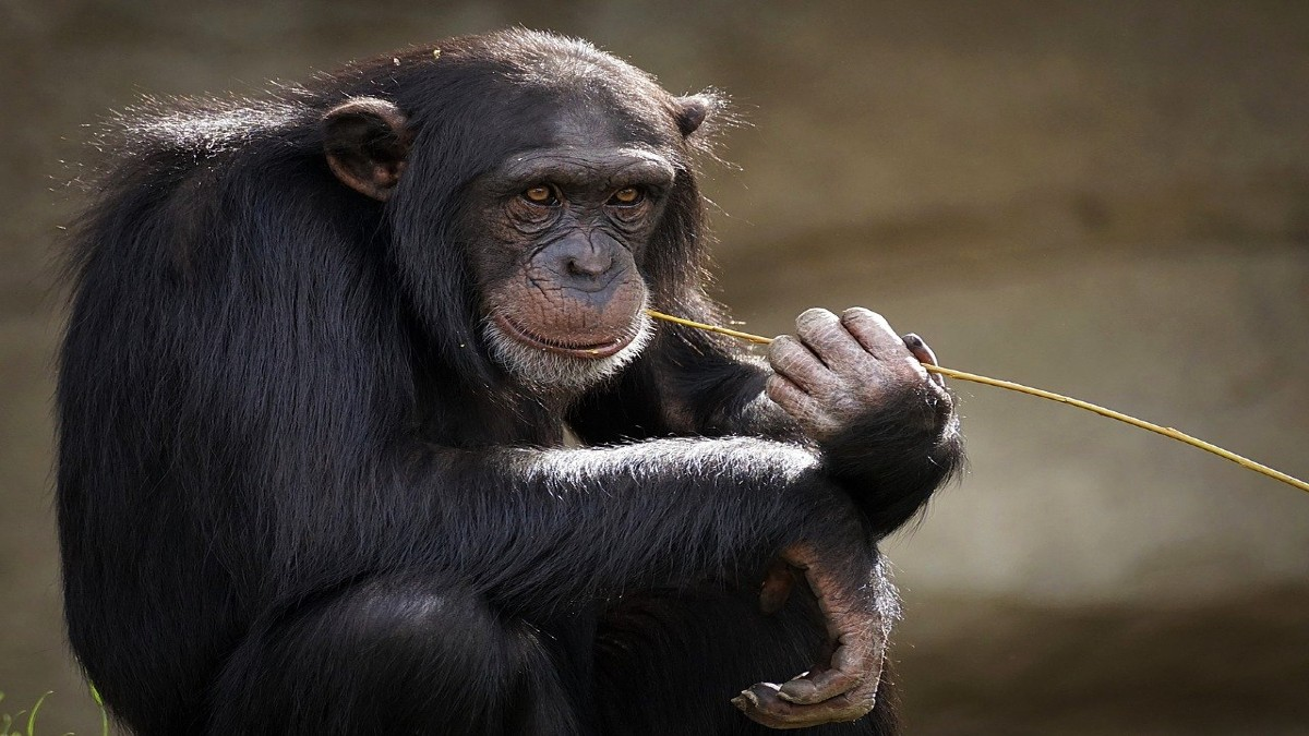 Monos en Tailandia. Foto: suju