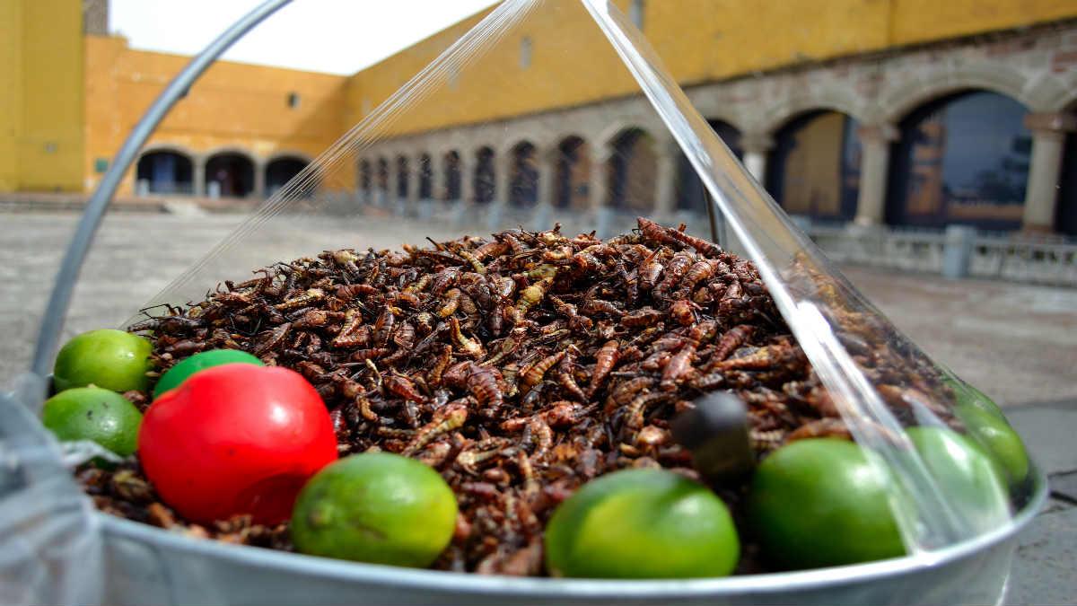 Portada.Chapulines un manjar de la gastronomía mexicana.Foto.Mirthyani Bezerra
