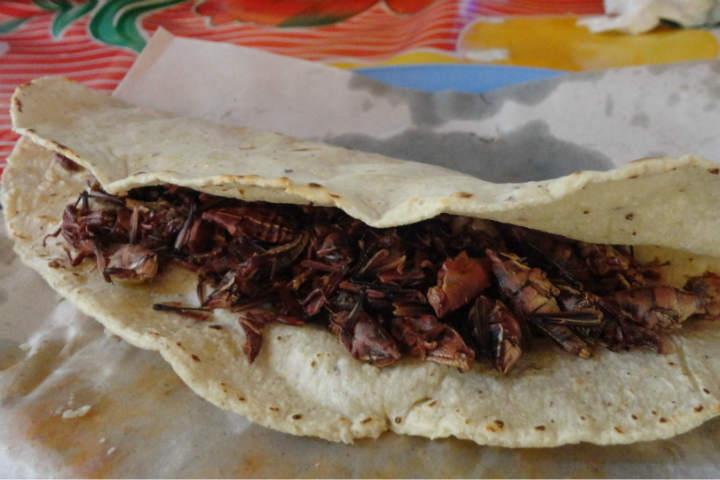 Una quesadilla rellena de chapulines verdaderamente una delicia.Foto.Kiwilimón.2