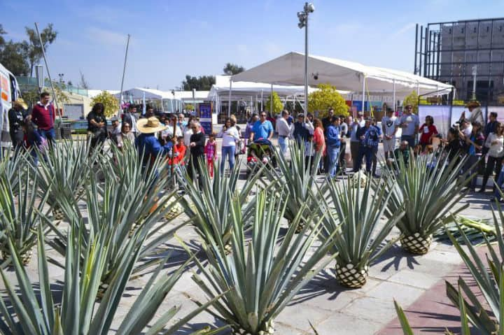 festival tequila guaddalajara