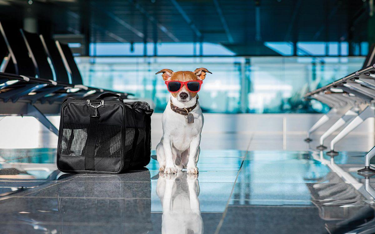 perro viajador