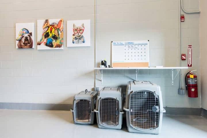 termina mascotas nyc (4)
