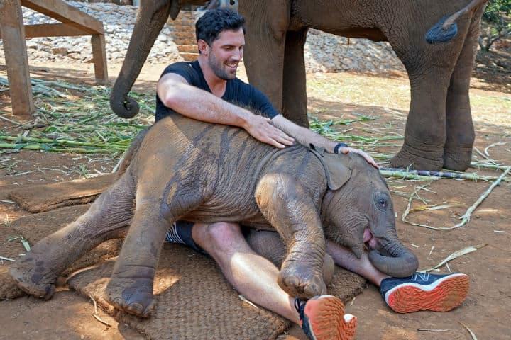 Elephant Stay tailandia