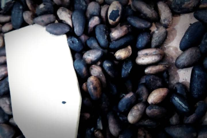 Tabasco – El cacao tostado