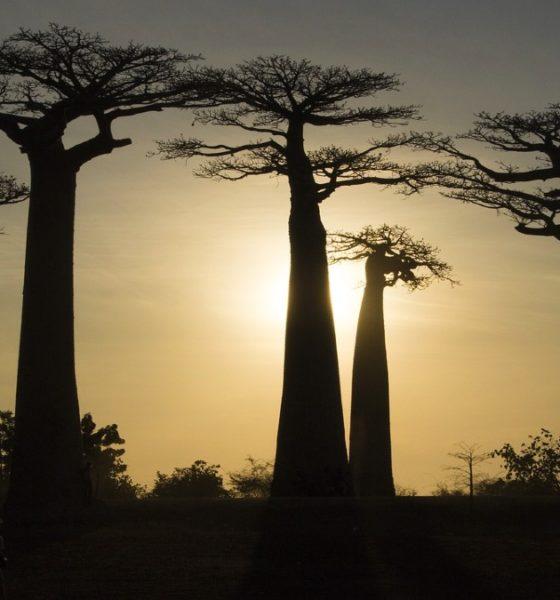 Turismo en Madagascar. Foto: shell300