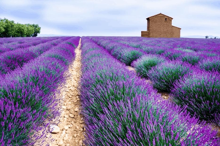 La provenza francesa y sus coloridos campos el souvenir - Casas en la provenza ...