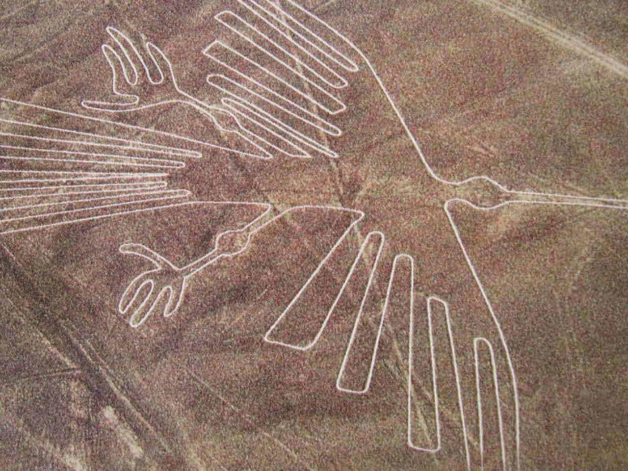 Ave en las líneas de Nazca. Foto: Archivo