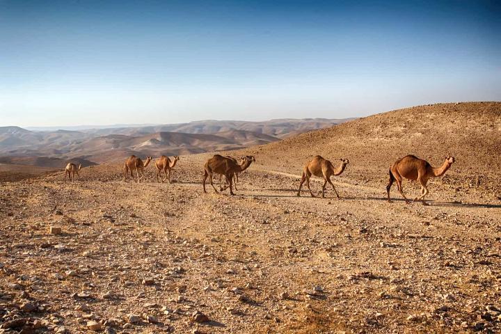 Desierto en Israel. Foto Archivo.