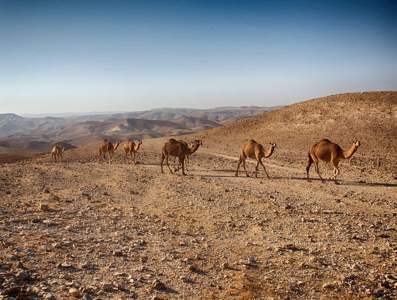desierto en Israel. Imagen: Israel. Archivo