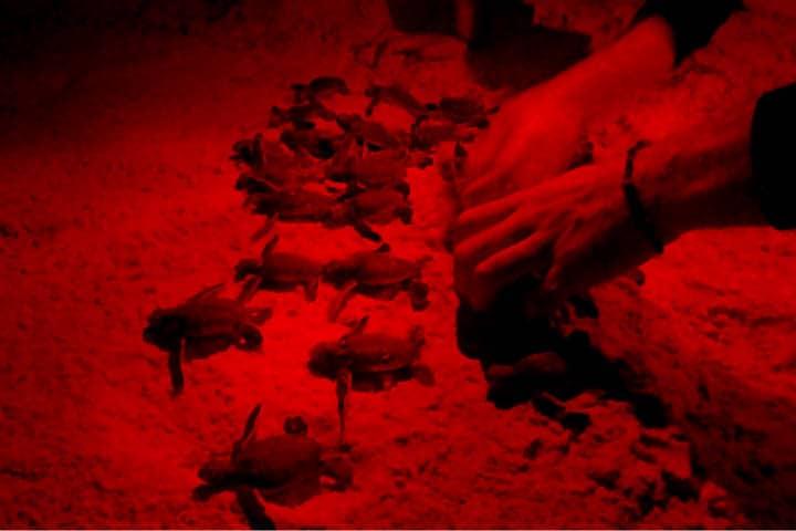 Azulik Foto El Souvenir 62