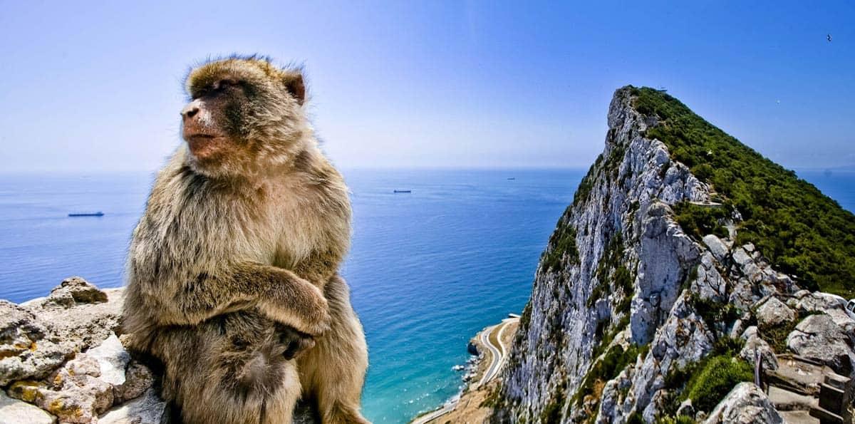 Los monos de Gibraltar