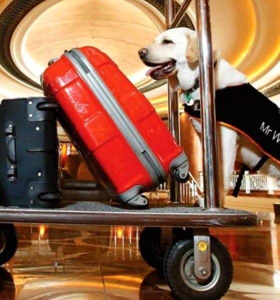 Perro botones Mr.Walker. Foto: Park Hyatt.