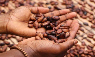 Podcast Ruta del cacao y del chocolate en Tabasco Foto Etty Fidele.